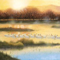 Laguna Pelicans